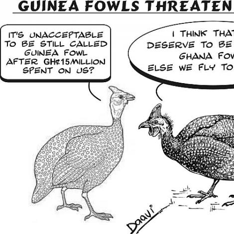 Guinea fawls threaten